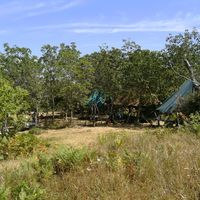 MANZI (TOSCANA)
